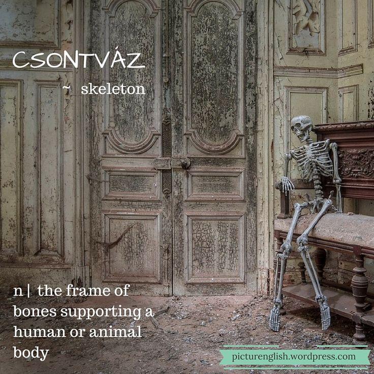 Skeleton / Csontváz