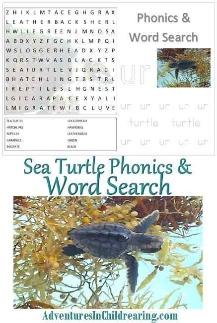 92 Best Images About Homeschool Sea Turtles On Pinterest
