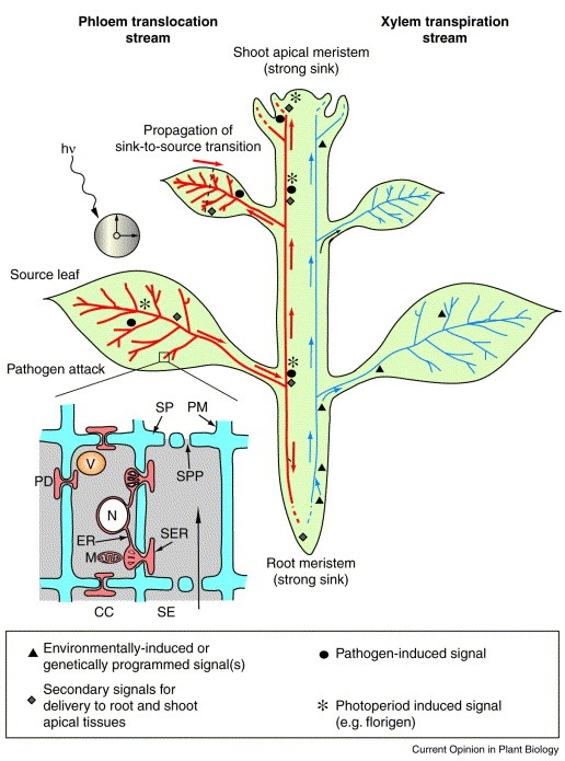 1000  Images About Vascular Plants On Pinterest