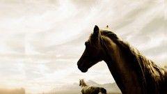 Die 9 Ethischen Grundsätze - Happy Horse-Easy Horse