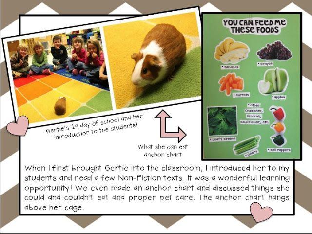 Classroom Grant Ideas ~ Best pet portraits images on pinterest dog parties