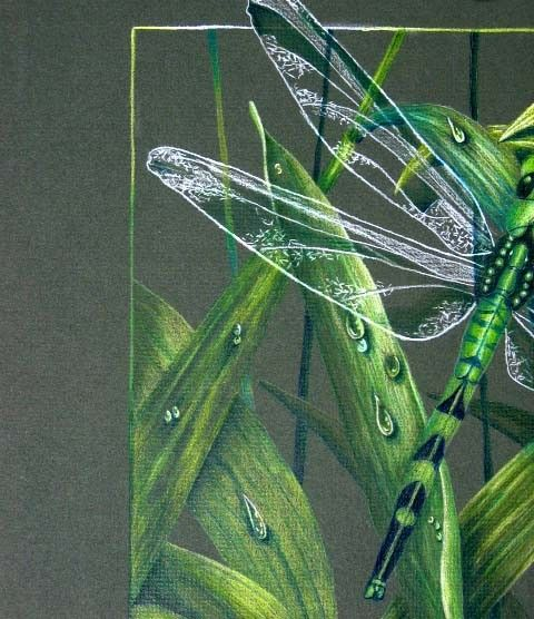 Shades of Green Dragonfly Colored Pencil by pumpkinpatch5 on Etsy