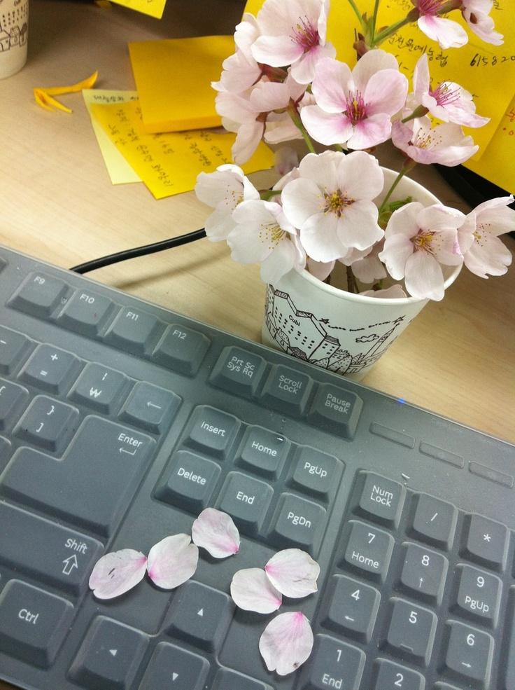 spring on my keyboard..