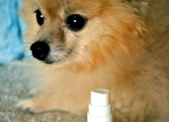 Make It! Green Your Dog DIY Essential Oil Mist Relaxing Dog Scents