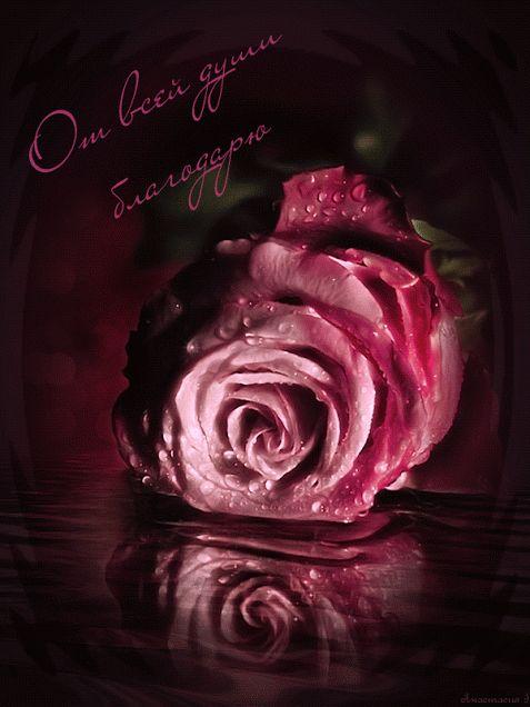 Открытки спасибо с розой женщине