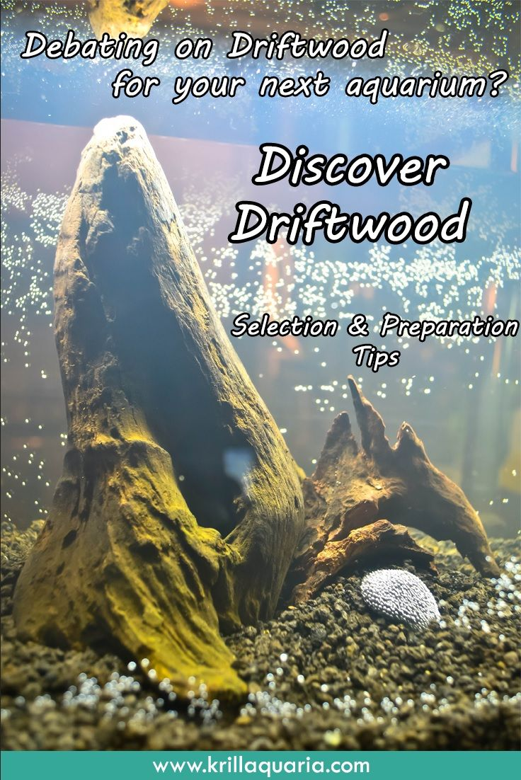 Interested in adding driftwood to your aquarium for that perfect aquascape? Then check out our article on how to select and prepare driftwood for aquarium introduction!