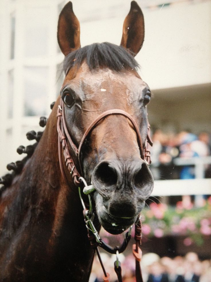 25 best Montjeu images on Pinterest   Race horses, Running ...  25 best Montjeu...