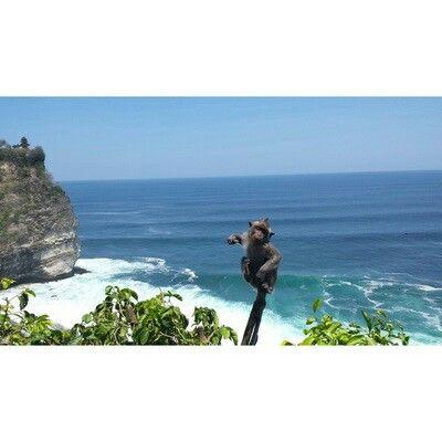 Monkey, uluwatu, Bali. #bali