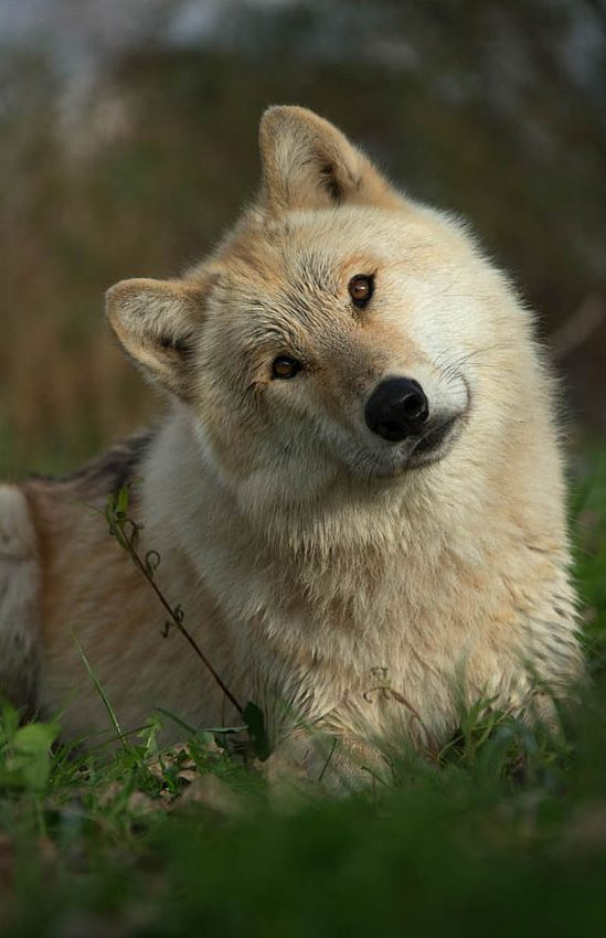 "the-smiling-wolf: "" Wishing you all a beautiful day. Be well, be happy my friends.  """