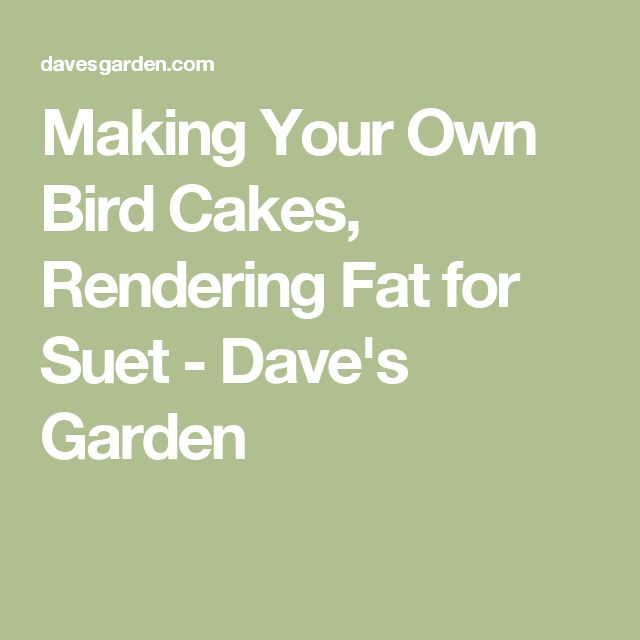 25 Best Ideas About Bird Cakes On Pinterest Easter Cake