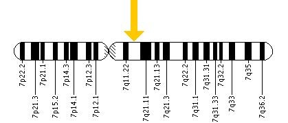 Image of where my son's ELN gene deletion is located.  Planning to dress this up and get a tattoo of it for my Finn