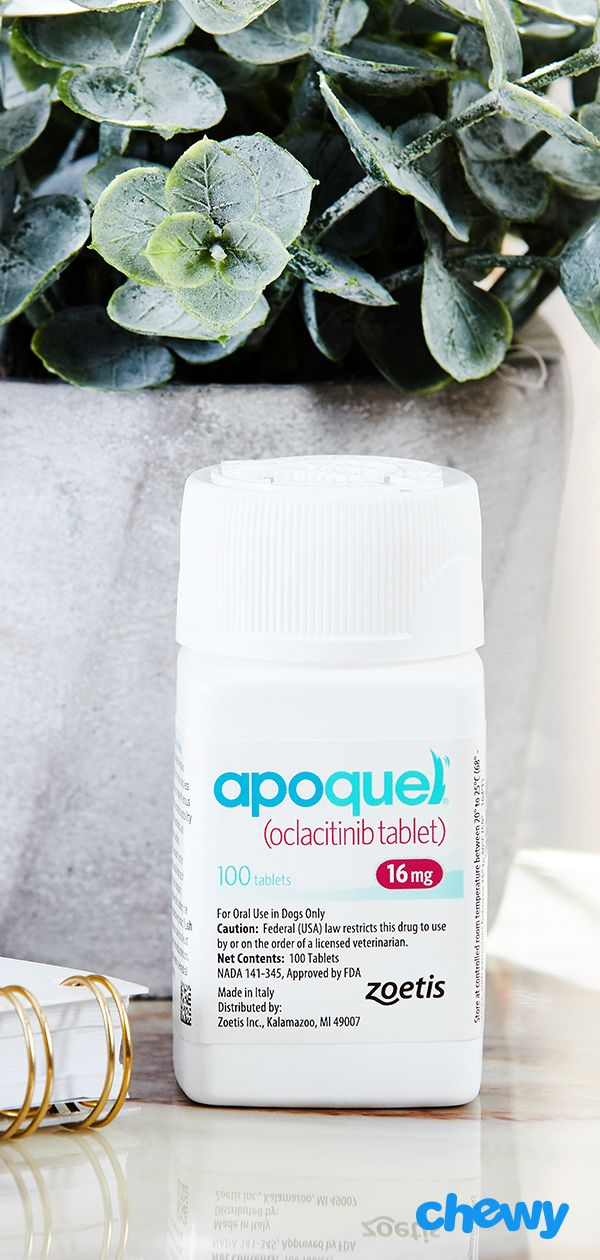 Apoquel Tablets For Dogs 16 Mg 1 Tablet Chewy Com Dog Allergies Allergy Medication Apoquel