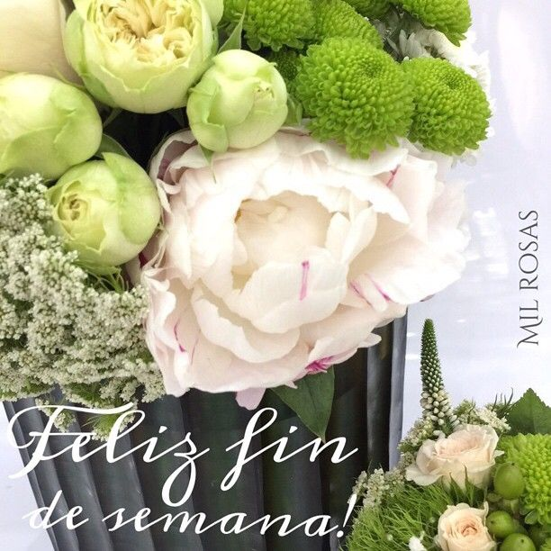 Rosas -Flores-Milrosas-Buenos dias-Especialistas en rosas-Goya 84-fin de…