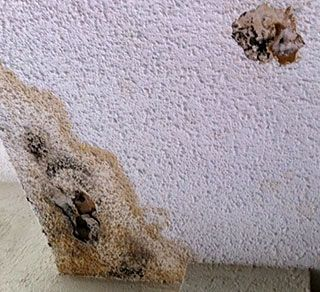 To remove mold from popcorn ceilings is a challenge - How to clean mold off bathroom ceiling ...