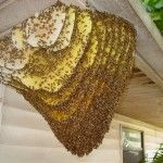 28.  Bee Removal: How To Remove Honey Bee Hive In 6 Simple Steps