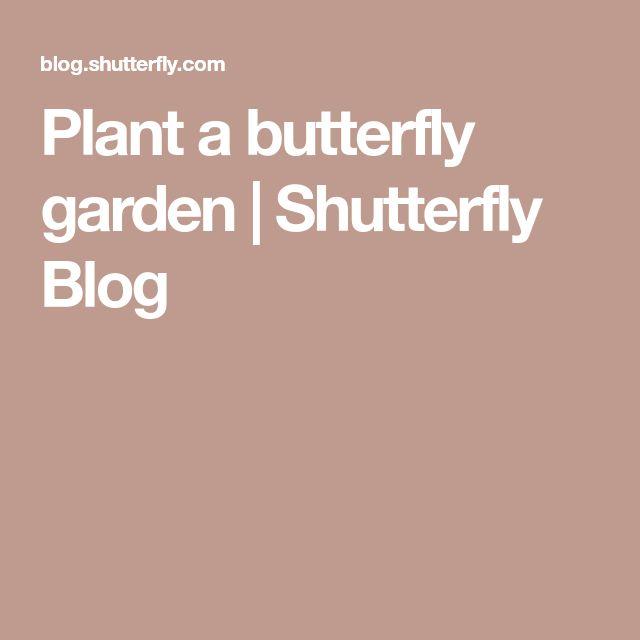 Plant a butterfly garden | Shutterfly Blog