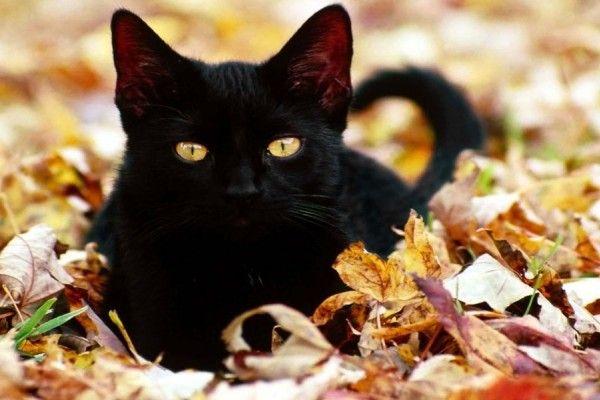 ¿Sabías que los gatos previenen fuerzas malignas? ~ Horóscopo y Fortuna