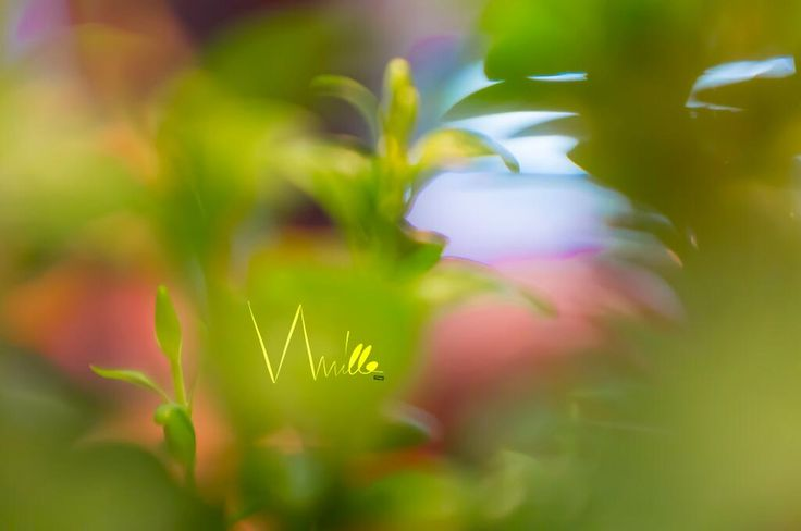 #spring, #green, #pink, #yellow, #violet, #blue