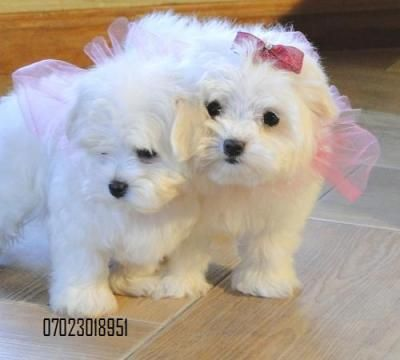 Omg they are adorable!! Some one buy me one of these cuties!