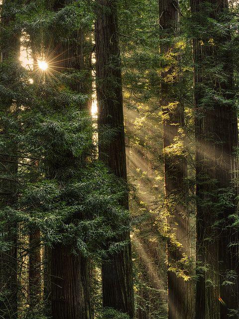 Del Norte Coast Redwoods, CA