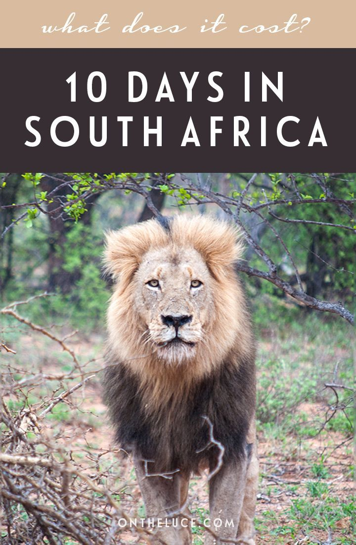 How much does it cost to visit South Africa? A trip budget breakdown for spending 10 days visiting Cape Town, the Kruger and Johannesburg, including accommodation, activities, transport and food.