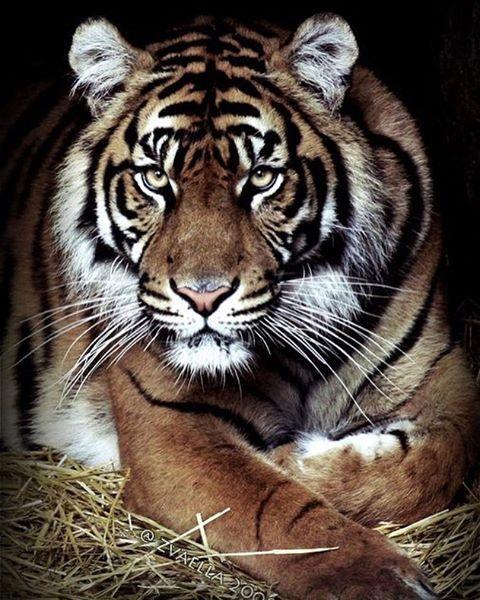Wild | Photo by ©Zvaella  Tag #wildlives