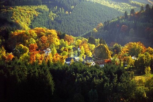 leaves changing color in La Roche-en-Ardenne
