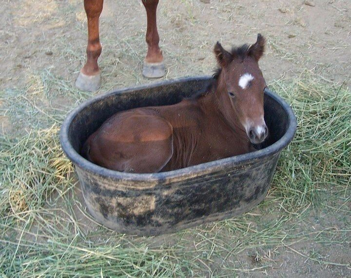 This Baby horse is practising, he wants to be a seahorse when he is older. :-)