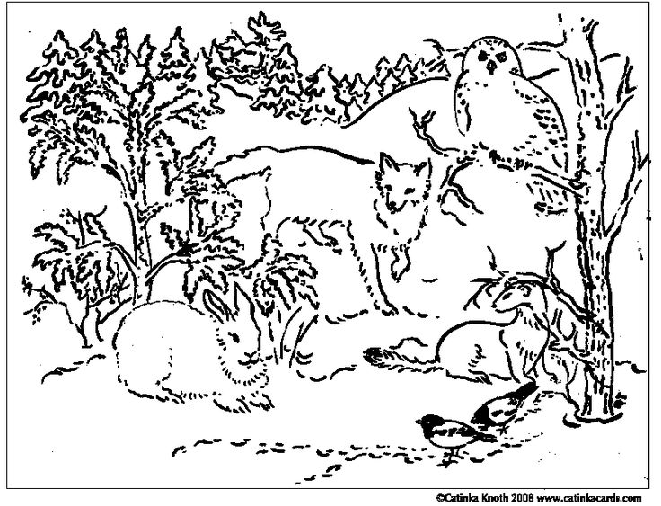 coloring pages of winter animals | coloring pages animals southwestern us - Google Search ...