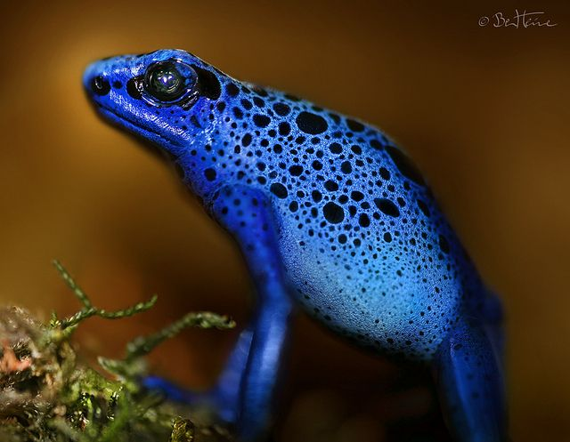 ~~Bluetiful by Ben Heine - the more colorful, the more poisonous~~