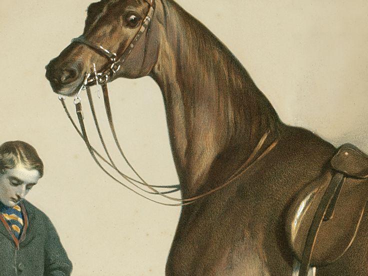 """Detail kresby """"Jezdecký kůň"""". Reprodukce originálu z roku 1860."""