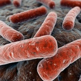 100 trillion bacteria in your gut