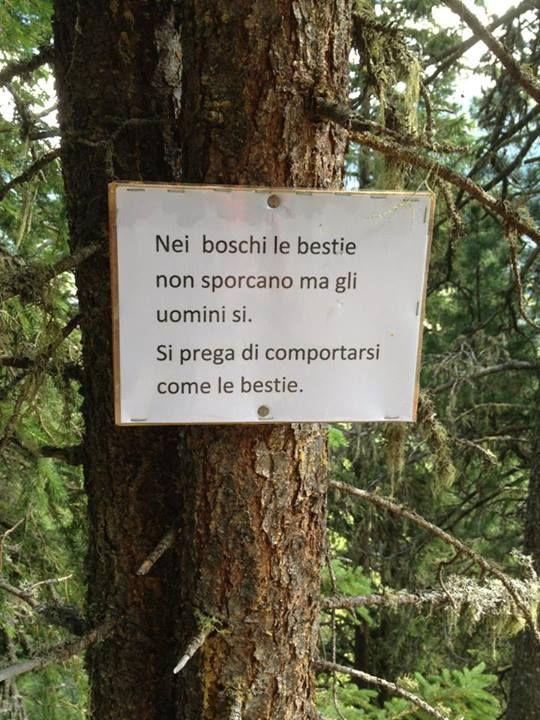 #Boschi #pulizia #animali