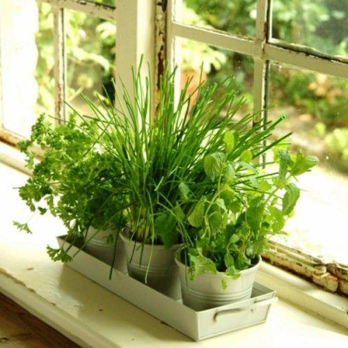 Bylinky majú miestno v každej kuchyni. Sušené bylinky sú síce fajn, ale nie je skvelé mať vždy po ruke čerstvé bylinky, ktoré si natrháte podľa potreby?