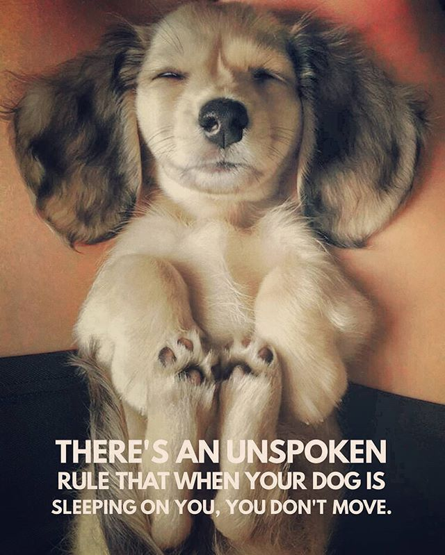 It's totally true...especially about Dachshunds