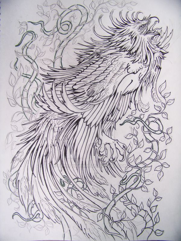 traditional japanese phoenix drawing - Google Search