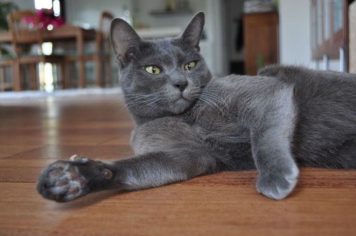 Hortax .... Cute cat on Yummypets.com