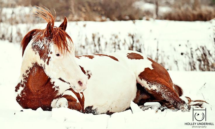 Chilling in the snow