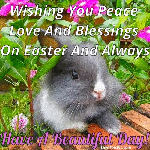 Wishing You Peace Love And Happiness On raster And Always