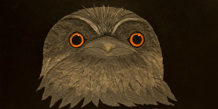Shop - The Ivy BoxTawny Frogmouth / Carlos Beaumont Mixed Media