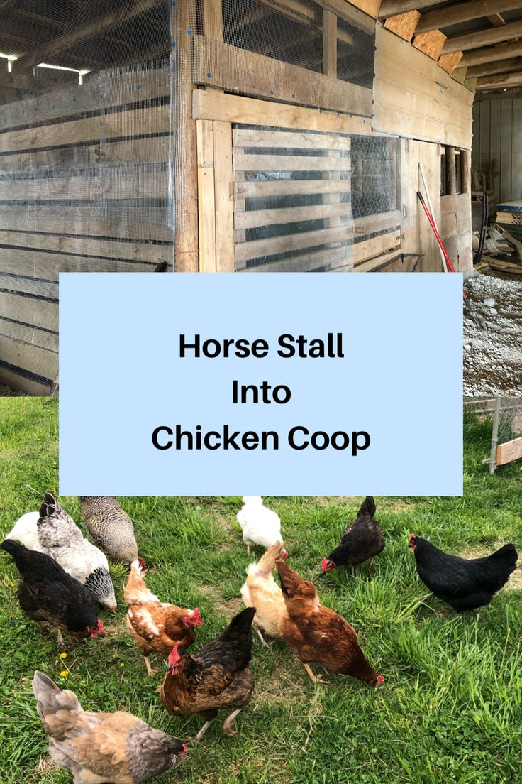 Horse stall turned into a chicken coop blooming acres