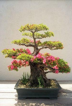 Bonsai. by Ookamishoujo