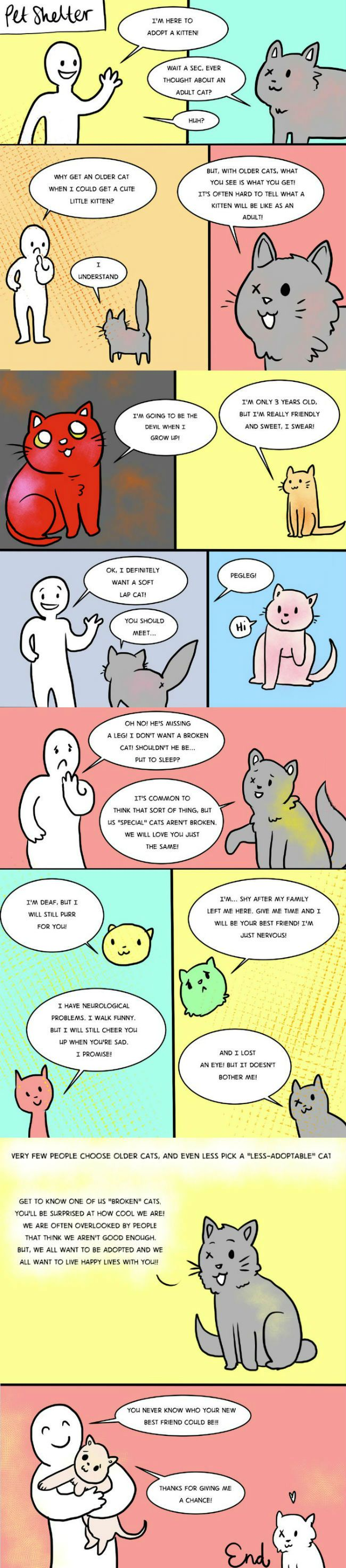 Thinking about adopting a cat?