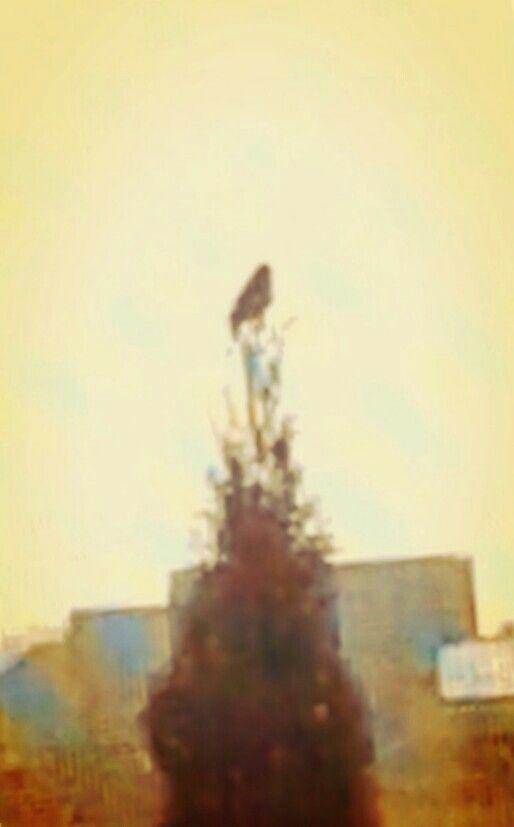 Ptaszek na tujce:-)