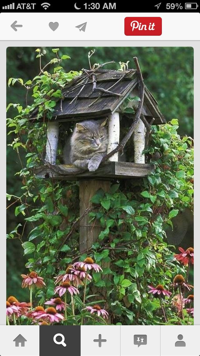 Outdoor DIY cat house picture