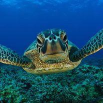 ZANZIBAR.Maggio 2017. Coral Reef resort 16 giorni 14 notti dal 2 Maggioo al 17 Maggio euro 1550 http://www.cocoontravel.uk