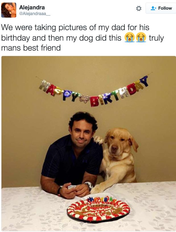 This pup who proves that dogs are indeed man's best friend. | 21 Pictures That Prove Dogs Are Actually Completely Perfect