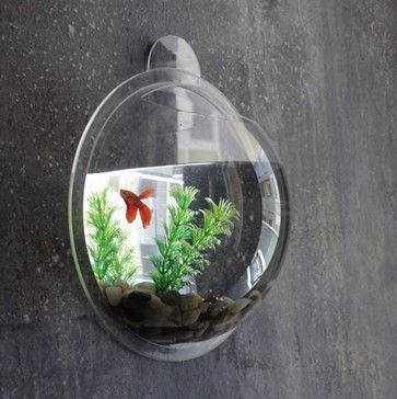"10"" Clear Acrylic Wall Mount Fishbowl with Gravel and Plant - eclectic - Fish Supplies - StealStreet"