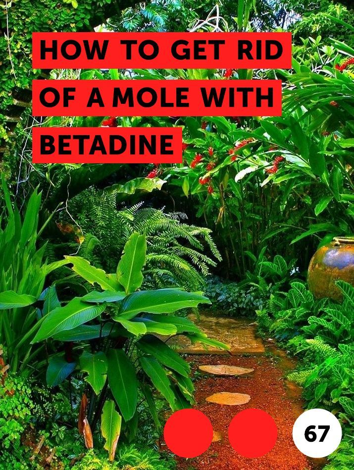 How to Get Rid of a Mole With Betadine. A mole is a growth on the skin that often appears brown, tan, gray or blue. Moles can appear anywhere on the body ...