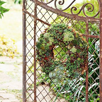 Make a Living WreathMaine Doors Wreaths Ideas, Decks, Dresses Up, Succulents Wreaths, Amber, Succulent Gardens, Succulent Plants, Living Wreaths, Iron Gates